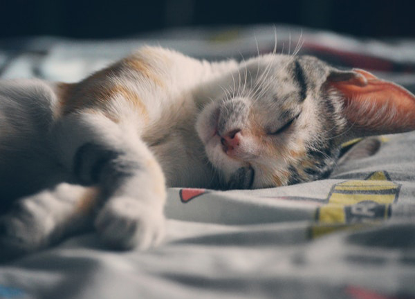Apple Cider Vinegar For Cats Benefits And How To Use It Best Pet