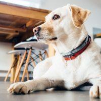 orijen-dog-food